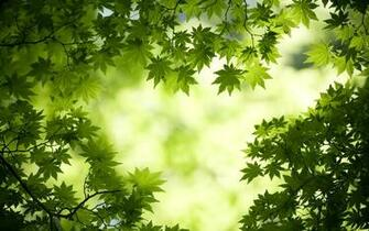 Green Maple Leaves Wallpapers HD Wallpapers