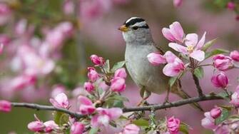 Hd Wallpaper Bird of Spring Birds Spring wallpaper Birds