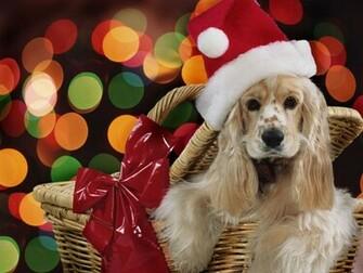 christmas christmas Wallpapers christmas Pictures christmas Gifts