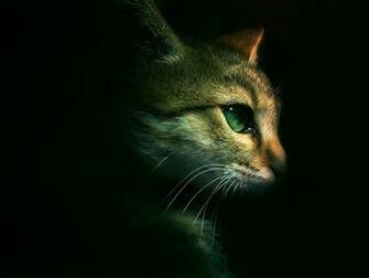 Download Warrior Cats Backgrounds