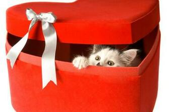 homeless cat or kitten by purchasing an Adoption Gift Certificate