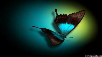 Blue Colored Butterfly With Black Background
