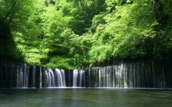 Nature Rain Forest desktop wallpaper nr 57841 by Striker