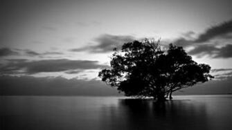 Black And White Nature Wallpapers
