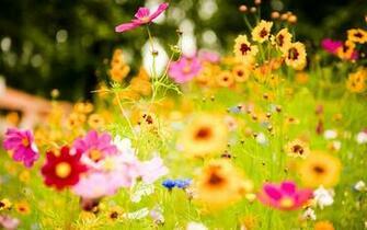 Wild flowers HD Desktop Wallpaper HD Desktop Wallpaper