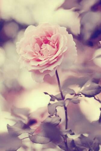 21 Cute Flower Wallpapers Tumblr