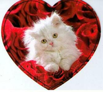 Valentine kitten Animals Round Robin From eellaa By alcott1