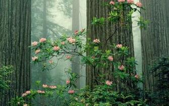 Redwood Sequoia National Park 1680x1050 wallpaper 1680x1050