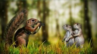 Animals Funny Desktop Hd Wallpaper 980 Wallpaper Wallpaper hd