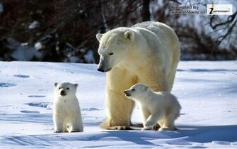 Cute animals pictures Cute winter pictures animals