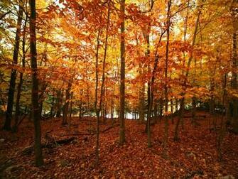 Autumn Wallpapers For Desktop Images Fun