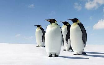 Cute Penguins Wallpaper HD Download For Desktop amp Mobile