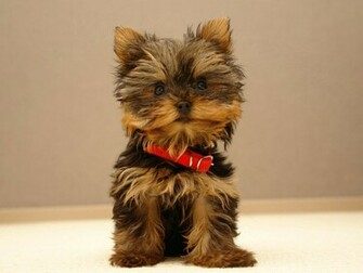 Cute puppy wallpapers Cute puppy stock photos