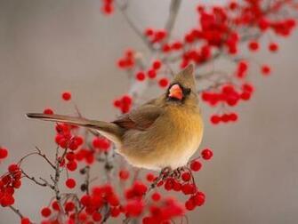 wallpaper beautiful bird wallpaper flying bird wallpaper bird desktop