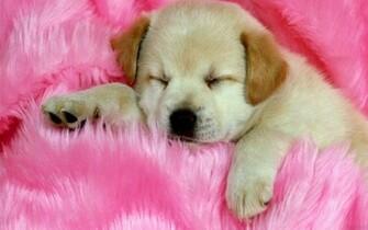 Cute Dog wallpaper   142694