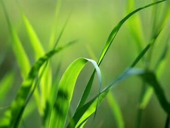 Green Wallpapers BestWallpaperZonecom