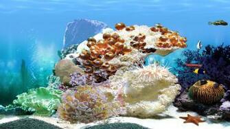Aquarium wallpaper 152522