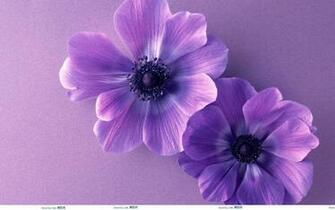 Cute Purple Backgrounds