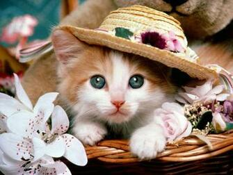 Top 10 Beautiful Cat Wallpapers