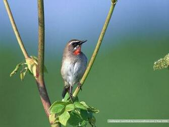Bird photography Vol3   Birds Variety Wallpaper   Birds on branches