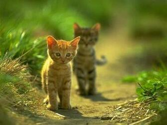 wallpapers Animals Wallpapers