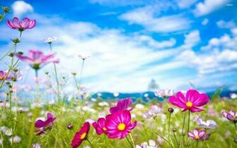 Summer Road HD Wallpaper Nature Download 4537 Wallpaper