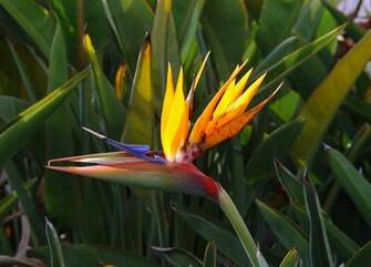 Bird Paradise Wallpaper Flower Wallpapers Design