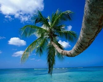 Palm Tree on a Beech computer desktop wallpaper