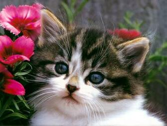 Wallpaper Gallery Cat Kittens Wallpaper  3