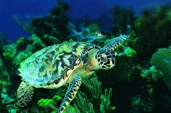 sea turtle iphone wallpaper wallpapers trendingspace