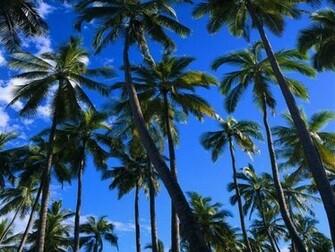 Palm Tree Wallpa