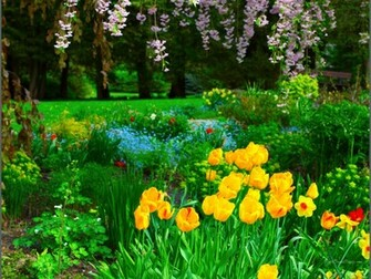 spring crocuses wallpaper size home wallpapers spring wallpapers