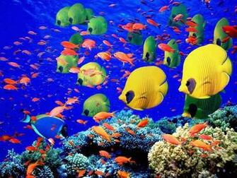 cool tropical fish wallpaper   beautiful desktop wallpapers 2014