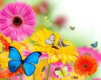 Spring Flowers and Butterflies Wallpapers HD Desktop and