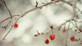 Cute Winter Desktop Wallpaper High Quality Pics of Winter