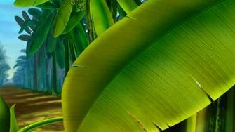 Multicolor leaves plants bananas palm fruit trees wallpaper 9768