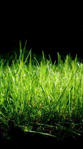lg g3 wallpapers 1440x2560 quad hd green grass
