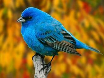 Animals Zoo Park Birds Desktop Wallpapers Bird Beautiful Wallpaper