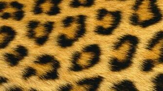 Leopard Skin Wallpapers and Background Images   stmednet