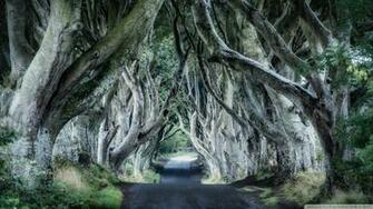 Dark Hedges Northern Ireland 4K HD Desktop Wallpaper for 4K