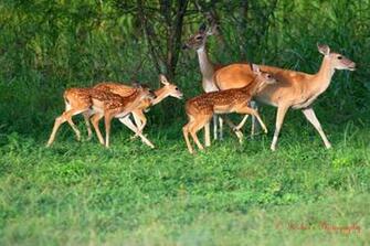 deer images deer photos deer photos deer photos deer photos