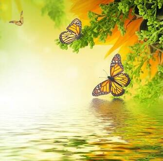 Images Monarch butterfly Insects Butterflies Animals