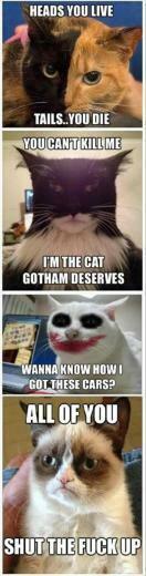 cat pictures funny grumpy cat pictures grumpy cat 65 pics grumpy cat