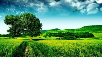Beautiful Green Landscape Wallpaper Desktop
