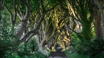 The Dark Hedges County Antrim Bregagh Road Northern Ireland UK
