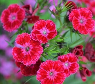 Beautiful Nature Flowers   Hot Girls Wallpaper