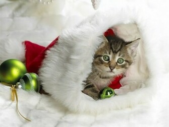 Cute Christmas Cats Pictures Christian Wallpapers