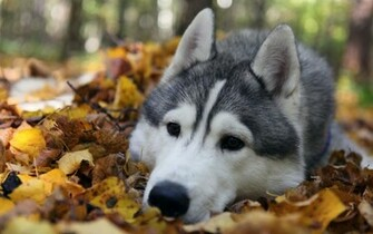 Autumn Animals Wallpaper 1920x1200 Autumn Animals Leaves Dogs