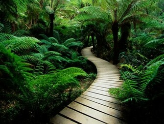Nature backgrounds music download   Just for Sharing