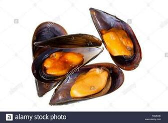 Cooked mussels isolated on white background Mytilidae Mussels